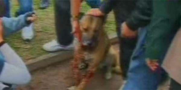 Argentina: Don't let Animal Abuse go Unpunished! Justice for Stray Dog Injured by Fireworks