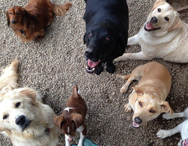 how to enroll your dog in day care