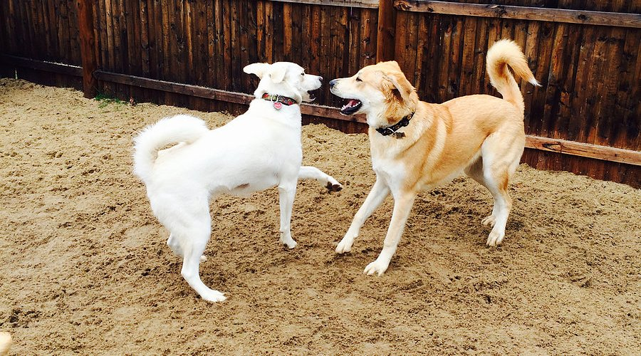 questions to ask a dog daycare provider