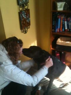 dingos dogsitting service