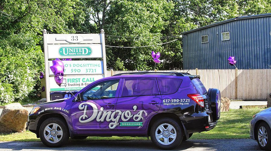 dingos doggy daycare