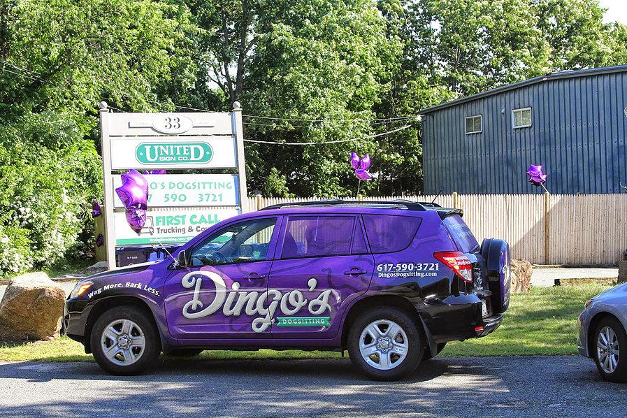 dingos doggy daycare