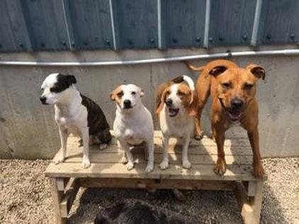 national dog day at dingos