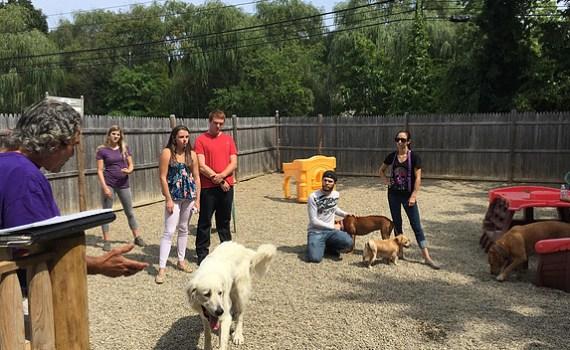 dog trainer north shore ma