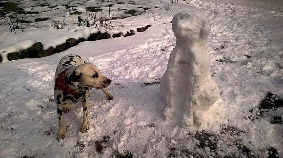 winter safety for dogs