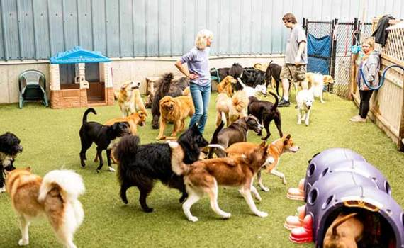 big group of dogs playing in Dingo's yard