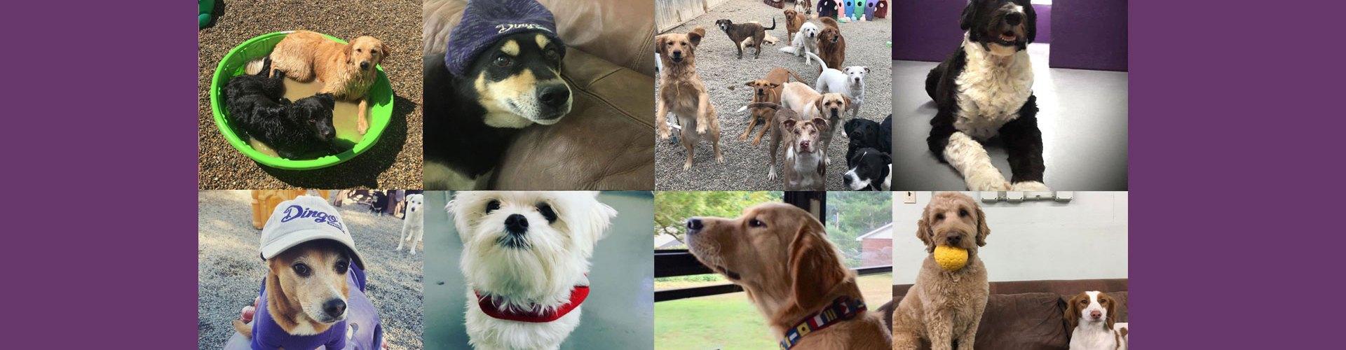 Dog Boarding | Beverly, MA | dingosdogsitting com