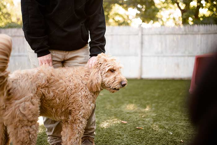 dog standing with handler at dingos daycare