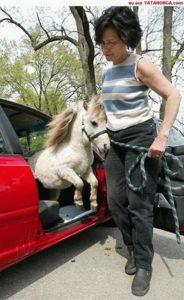 Le Plus Petit Cheval Du Monde : petit, cheval, monde, Petits, Chevaux, Monde, DingoZOO