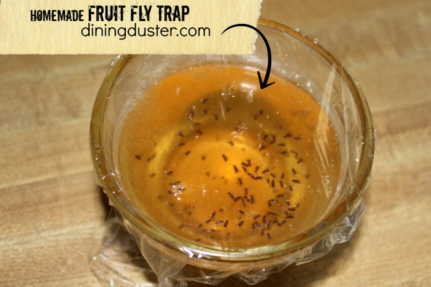 get rid of pesky fruit flies with an easy diy fruit fly trap dining duster. Black Bedroom Furniture Sets. Home Design Ideas