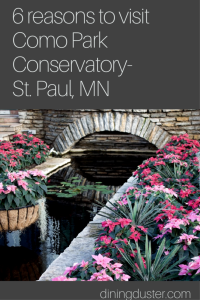6 reasons to visit Como Park Conservatory- St. Paul, MN - Diningduster.com
