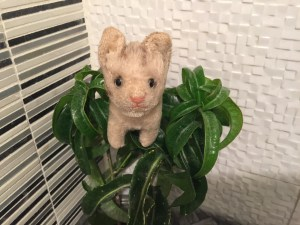 She climbed the plant in the bathroom