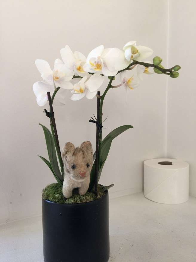 Frankie found her favorite, orchids, in the bathroom