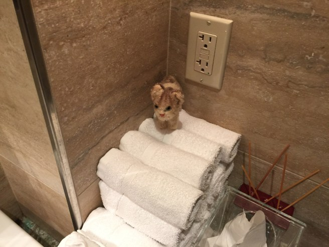 Frankie always finds the bathroom towels