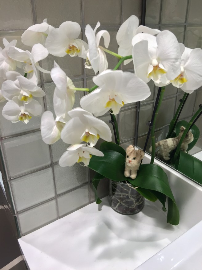 Frankie loves an orchid