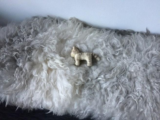 Frankie found a furry seat cushion