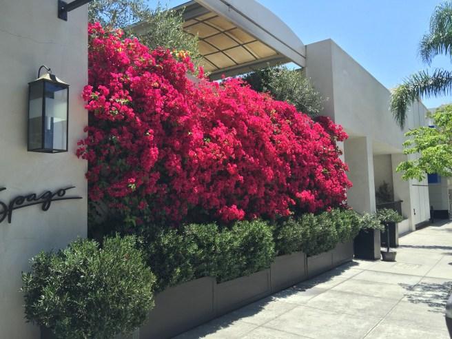 beautiful bush outside