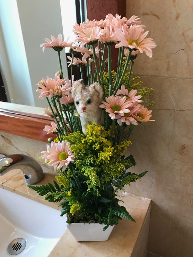 Frankie found some flowers