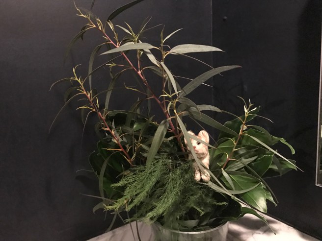 Frankie and a plant