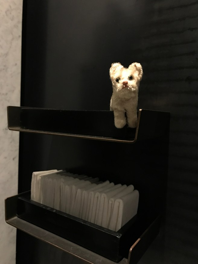 Frankie found a shelf to pose on