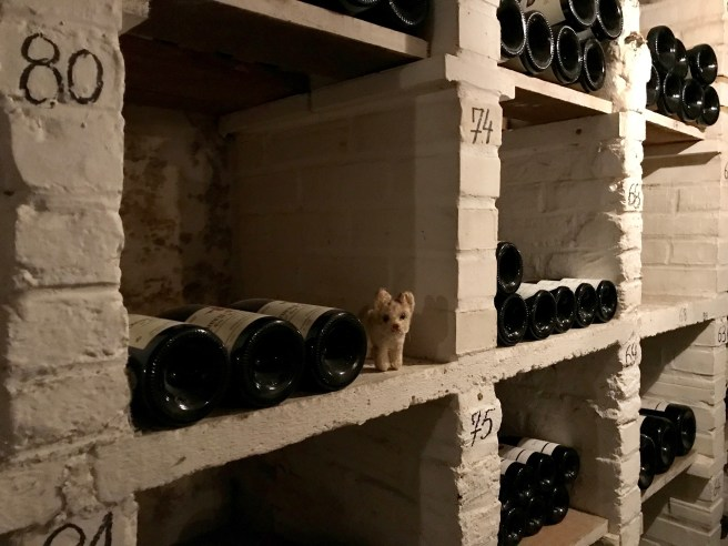 Frankie loved it in the wine room