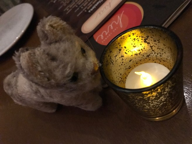 Frankie warmed up by the candle