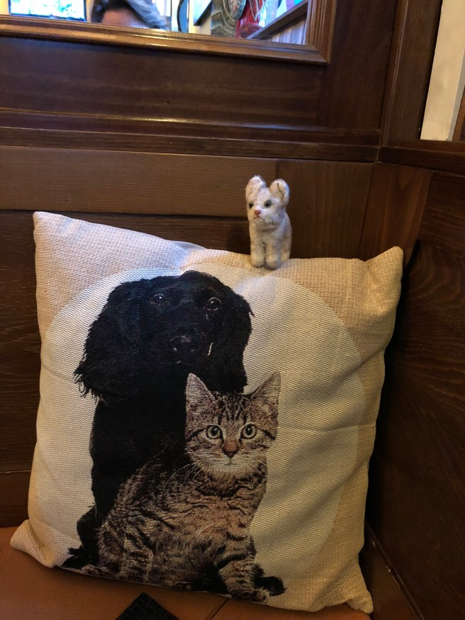 Frankie liked the pillow with a cat