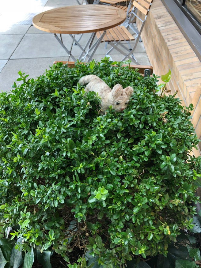 Frankie almost got lost in the shrubbery