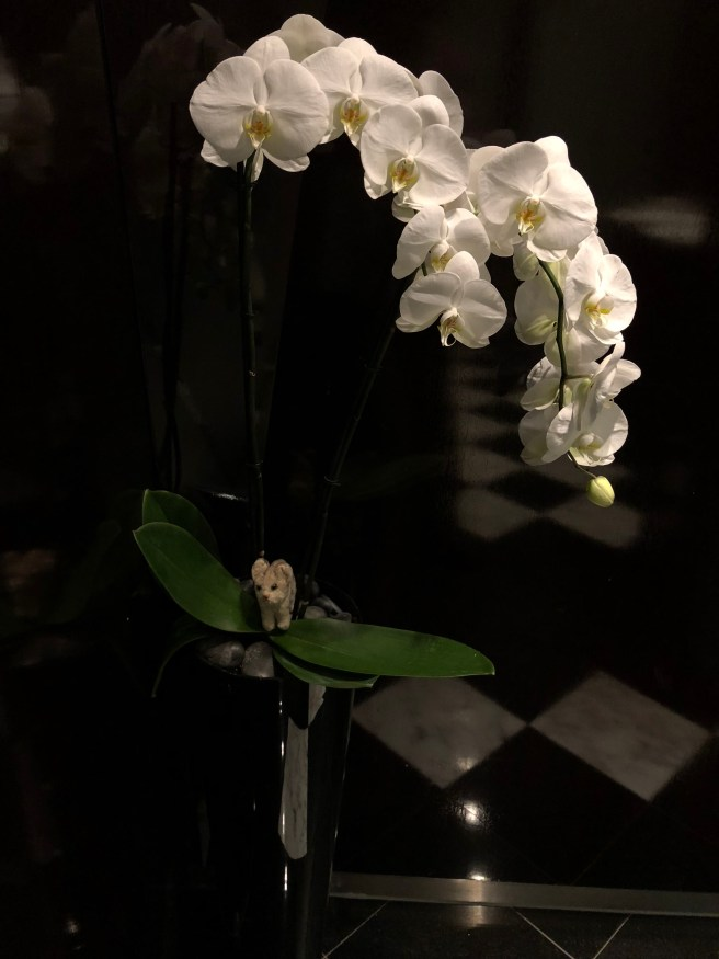 Frankie found an orchid