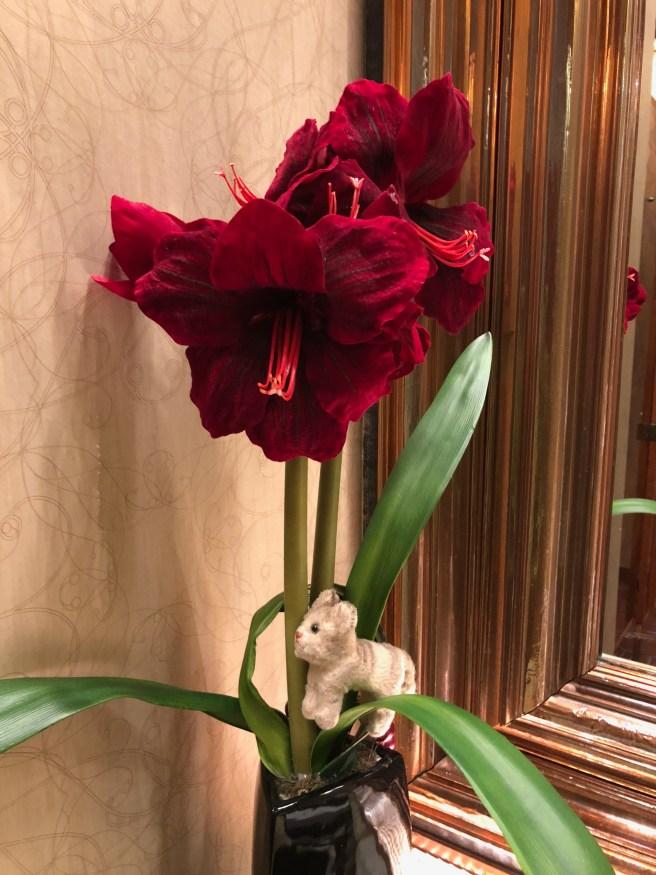 Frankie found a flower