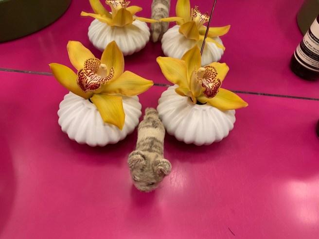 Frankie found orchids