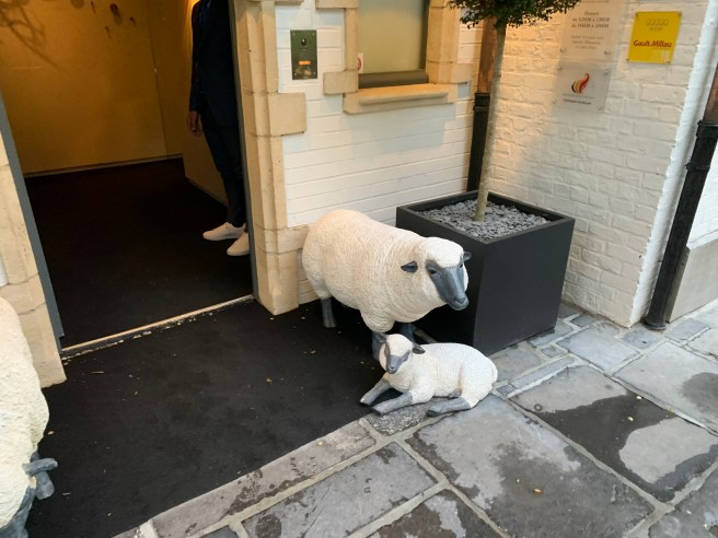 welocme sheep