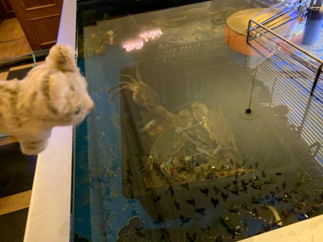 Frankie found the crab tank
