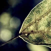 magical leaf...