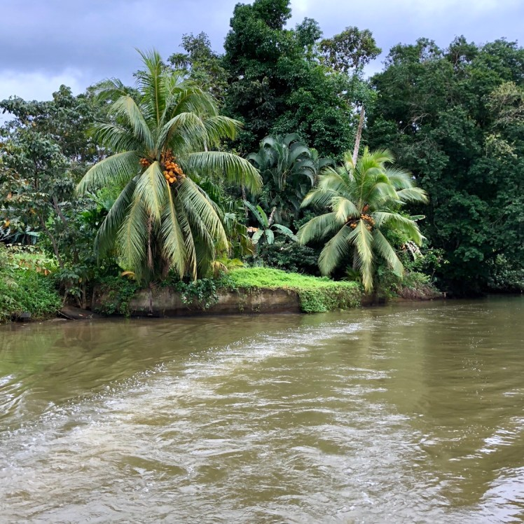 Tortuguero National park's canals take you deep into the rainforest