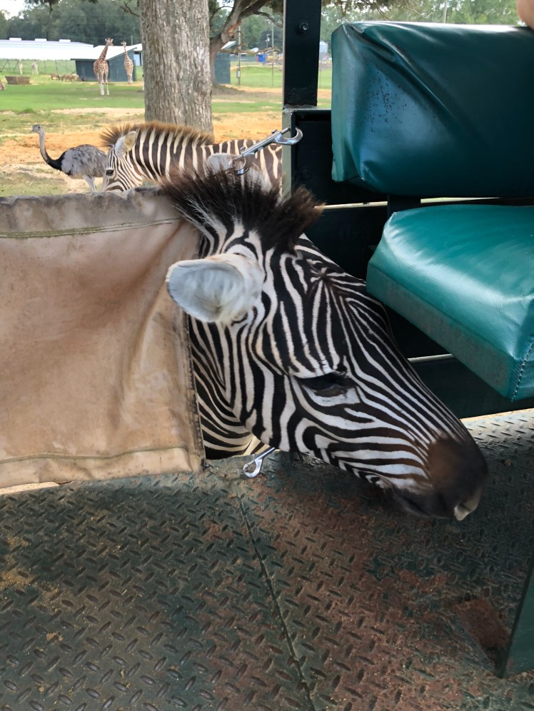 Global Wild Life Center has over 4000 free roaming animals