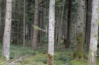 Black Forest 024
