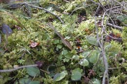 Black Forest 028