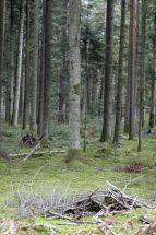 Black Forest 039