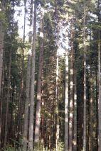 Black Forest 041