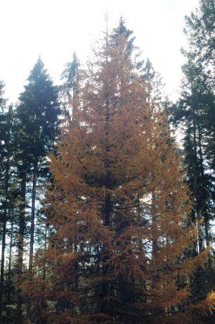 Black Forest 053