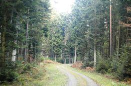 Black Forest 056