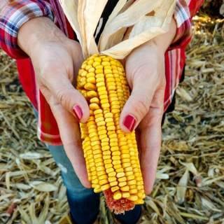 Iowa CornQuest 2016