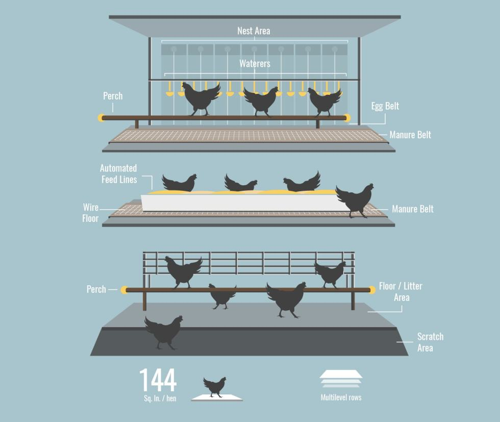 cage free hen housing model
