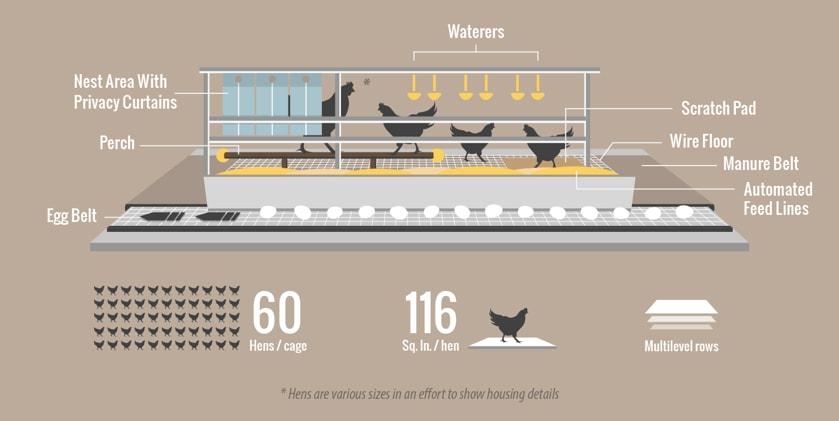 colony hen housing model