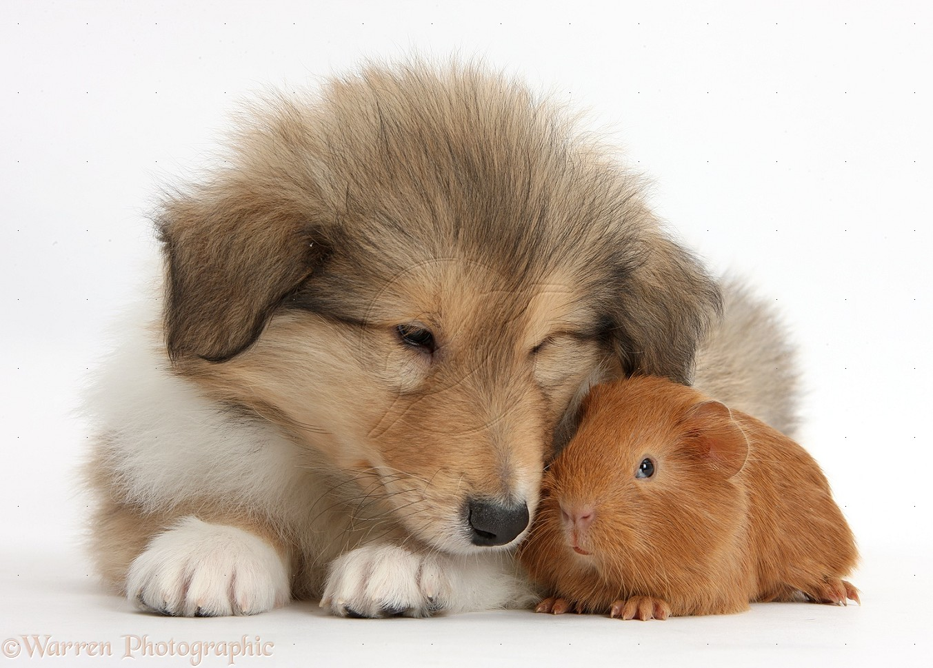 Cute Puppies Wallpaper White Dinosaur Farts Smell Like Oil Everything I Like And Want