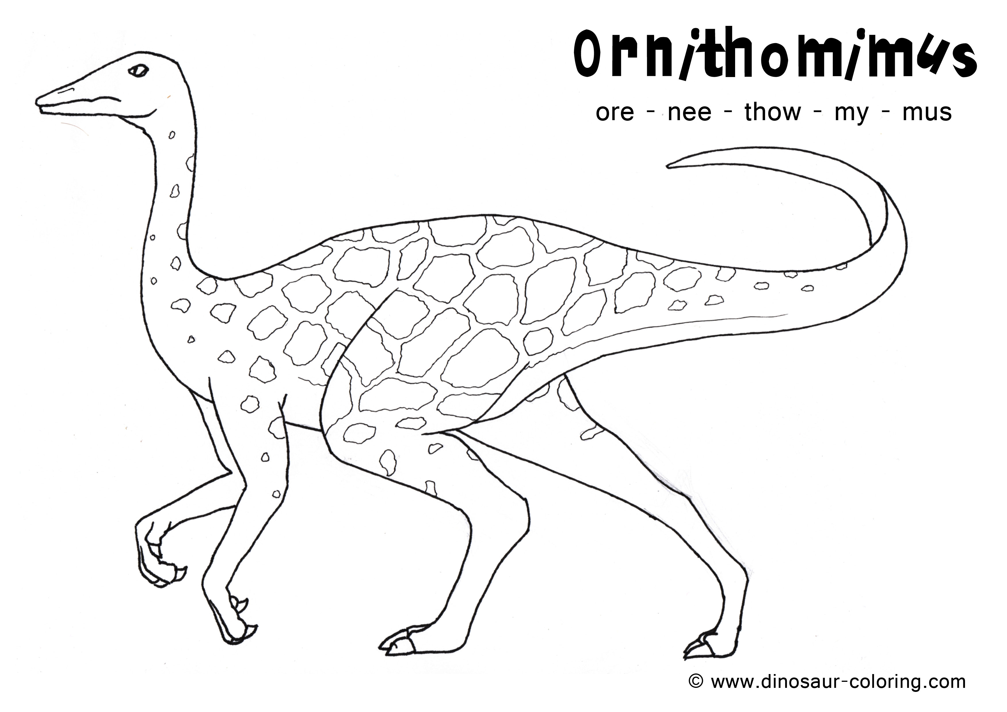 Dinosaur Head Coloring Pages Sketch Coloring Page