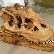 S24.5173 T-rex Dinosaurier-Schädel