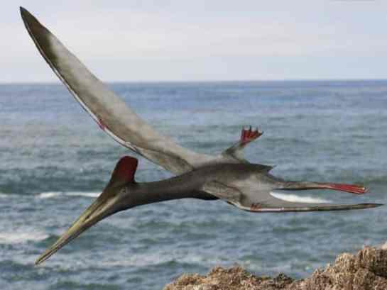 Resultado de imagen de pterosaurios