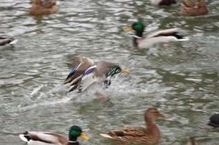 quackmire_10